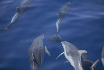 blue-lagoon-7-1030x687